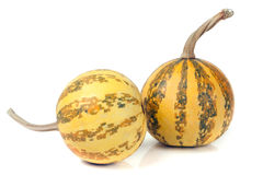Two striped decorative pumpkins isolated on white background Royalty Free Stock Photo