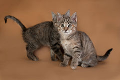 Two striped kitten sitting on brown Royalty Free Stock Photography
