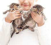 Two striped kittens Stock Photography