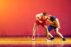 Two strong wrestlers. In blue wrestling tights are wrestlng and making a suplex wrestling on a yellow wrestling carpet in the gym. Young men doing grapple royalty free stock photography
