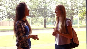 Two students talking to each other stock footage