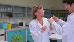 Two students testing the plant. In laboratory stock video