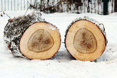 two stump of old poplar trees sawn off lie on snow. Stock Image