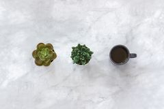 Two succulent flowers pots and black cup of coffee stand in row on marble table background. Minimal style Flat lay Copy space Top- royalty free stock photography