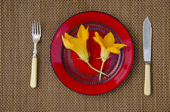 Two summer pumpkin zucchini flowers in red plate on table Royalty Free Stock Photos