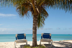 Two sun lounges under palm tree Stock Photo