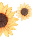 Two sunflower decoration white background Stock Images