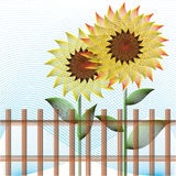 Two sunflowers Royalty Free Stock Photos