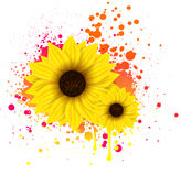 Two Sunflowers On Grunge Backround Royalty Free Stock Photography