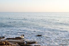 Two surfers going into the ocean in Taghazout - Panoramas surf spot royalty free stock photography
