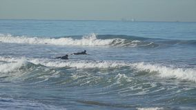 Two surfers near the Santa Monica Pier. stock video footage
