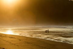 Two surfers sit on the shore of the ocean watching the sunset. Royalty Free Stock Images