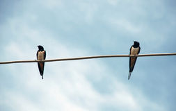 Two swallows. On wire over blue sky Royalty Free Stock Image