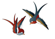 Two Swallows. A colorful illustration of two swallows, isolated on a white background Royalty Free Stock Image