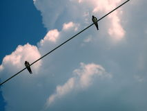 Two swallows on the line. With white clouds in background Royalty Free Stock Photo