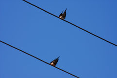 Two swallows Royalty Free Stock Photography