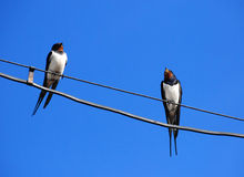 Two swallows on wire Royalty Free Stock Image