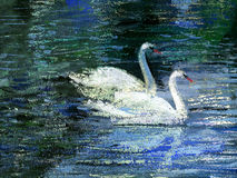 Two swans