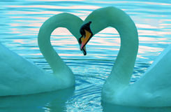 Two Swans. A digital image of two swans with a heart shape, edited in photoshop Stock Images