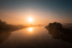 Two swans drifting along a misty river Nene at sunrise Royalty Free Stock Photo