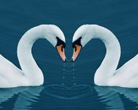 Two swans and heart Royalty Free Stock Photography