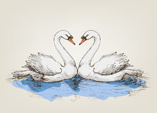 Two swans on lake Stock Photos