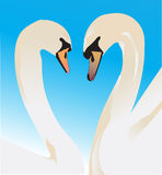 Two swans in love Stock Image