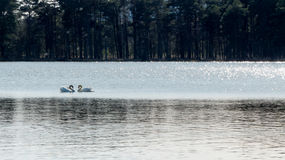 Two swans - love concept Stock Photography