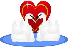 Two swans in love, for life.. Royalty Free Stock Images