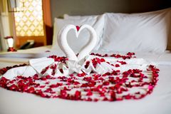 Two swans made from towels are kissing on honeymoon white bed. Creamy pillow and heart form, valentine signature made from red rose flower on bed decoration in Royalty Free Stock Photo