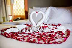 Two swans made from towels are kissing on honeymoon white bed. Creamy pillow and heart form, valentine signature made from red rose flower on bed decoration in Stock Photos