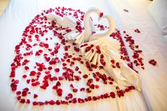 Two swans made from towels are kissing on honeymoon white bed. Creamy pillow and heart form, valentine signature made from red rose flower on bed decoration in royalty free stock photos