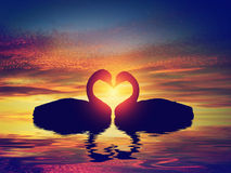 Two swans making a heart shape at sunset. Valentine's day Royalty Free Stock Images