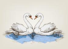 Free Two Swans On Lake Stock Photos - 70457563