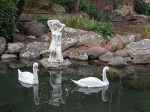 Two swans in a pond with antique sculpture. In high quality Stock Image