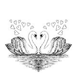 Two swans sketch. Hand drawn vector illustration. vector illustration