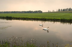 Two swans at sunset Stock Image