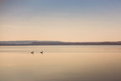 Two swans on water Stock Photo
