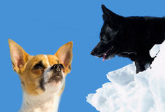 Two sweet and beautiful dogs with a blue sky in the background. Two dogs, one small and one large, outdoors in winter with a bright blue sky in the background Stock Photos