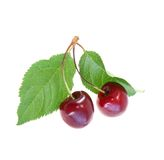 Two sweet cherries Stock Photo
