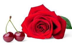 Two sweet cherries and rose Royalty Free Stock Photos