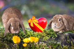 Two sweet Easter bunnies in the garden. Sweet little Easter bunnies on the grass stock photography