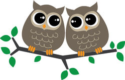 Two sweet little brown owls Stock Photography