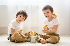 Two sweet little children, preschool boys, brothers, playing wit Royalty Free Stock Images