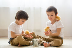 Two sweet little children, preschool boys, brothers, playing wit Royalty Free Stock Photos