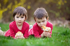Two sweet little children, preschool boys, brothers, playing wit. H little chicks in the park, springtime royalty free stock images