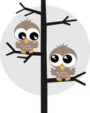Two sweet owls in a tree Stock Photography
