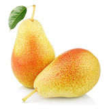 Two sweet red yellow pear fruits Royalty Free Stock Photo