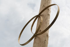 Two symbolic rings on wood tree Stock Images