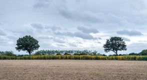 Two symmetrical trees with a harvested field on the foreground and blue clouds on the background. stock images